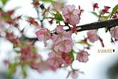 100年1月『櫻花季』相簿主題投稿活動:[leo_amy] 20100220_039.jpg