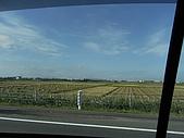 柿収穫初体験IN NIIGATA:到處都是乾枯的田