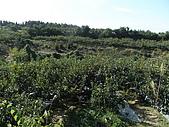 柿収穫初体験IN NIIGATA:到達目的地  是山地!