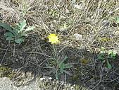 柿収穫初体験IN NIIGATA:小花花很聰明還會找陰影生長