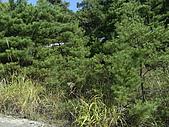 柿収穫初体験IN NIIGATA:新潟到處是這些植物