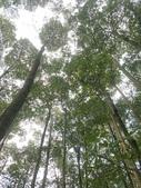埔里黑森林:img20180220160158_25548499727_o.jpg