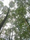 埔里黑森林:img20180220160205_39523997015_o.jpg
