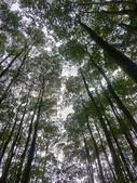 埔里黑森林:img20180220160115_39524032855_o.jpg