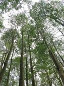 埔里黑森林:img20180220160217_39524046165_o.jpg