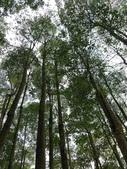 埔里黑森林:img20180220160212_40419900221_o.jpg