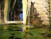 一座位於斗六市郊區的摩爾式秘密花園:1541233880.jpg