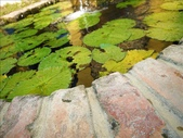 一座位於斗六市郊區的摩爾式秘密花園:1541233881.jpg
