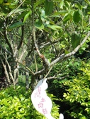 夢幻中的安妮公主花園:1852474110.jpg