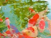 一座位於斗六市郊區的摩爾式秘密花園:1541233882.jpg
