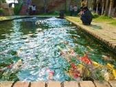 一座位於斗六市郊區的摩爾式秘密花園:1541233873.jpg