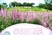 桃園大溪花海農場:1058100417.jpg