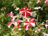 一座位於斗六市郊區的摩爾式秘密花園:1541233874.jpg