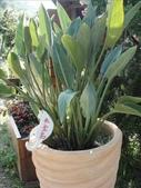 夢幻中的安妮公主花園:1852474106.jpg