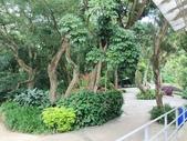 納美花園:IMG_7865.jpg
