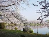 2015春櫻上野不忍池:P1250552.jpg