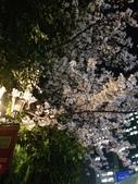 2015赤坂夜櫻:IMG_1942.jpg