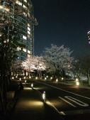 2015赤坂夜櫻:IMG_1949.jpg