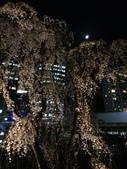 2015赤坂夜櫻:IMG_1954.jpg