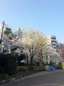 2015春櫻上野不忍池:IMG_2120.jpg