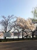 2015春櫻上野不忍池:IMG_2137.jpg