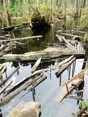 溪頭忘憂森林之旅:IMG_3332.jpg