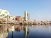 2015春櫻上野不忍池:IMG_2119.jpg