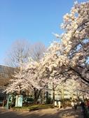 2015春櫻上野不忍池:IMG_2121.jpg