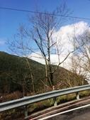 2014武陵農場櫻花季:IMG_3039.jpg