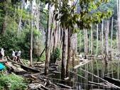 溪頭忘憂森林之旅:IMG_3337.jpg