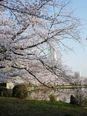 2015春櫻上野不忍池:P1250550.jpg