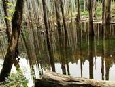 溪頭忘憂森林之旅:IMG_3342.jpg