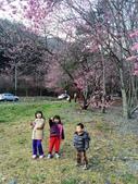 2014武陵農場櫻花季:IMG_3064.jpg