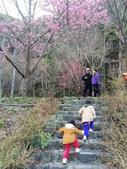 2014武陵農場櫻花季:IMG_3068.jpg