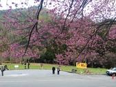2014武陵農場櫻花季:IMG_3070.jpg