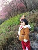 2014武陵農場櫻花季:IMG_3073.jpg