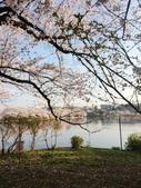 2015春櫻上野不忍池:IMG_2126.jpg