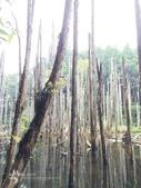 溪頭忘憂森林之旅:IMG_3341.jpg