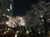 2015赤坂夜櫻:IMG_1952.jpg