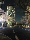 2015赤坂夜櫻:IMG_1941.jpg