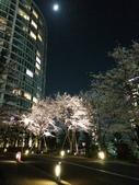 2015赤坂夜櫻:IMG_1950.jpg