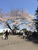 小田原城櫻花:IMG_2032.JPG