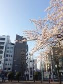 2015春櫻上野不忍池:IMG_2135.jpg