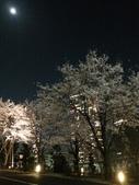 2015赤坂夜櫻:IMG_1951.jpg