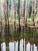溪頭忘憂森林之旅:IMG_3338.jpg