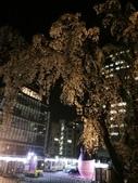 2015赤坂夜櫻:IMG_1953.jpg