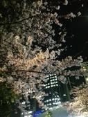 2015赤坂夜櫻:IMG_1943.jpg