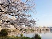2015春櫻上野不忍池:IMG_2132.jpg