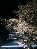 2015赤坂夜櫻:IMG_1944.jpg