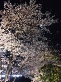 2015赤坂夜櫻:IMG_1945.jpg